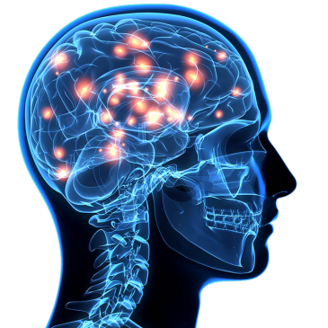 Sport et neurogenèse