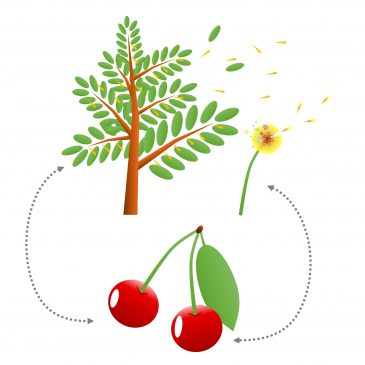 ALLERGIES POLLENS-ALIMENTS